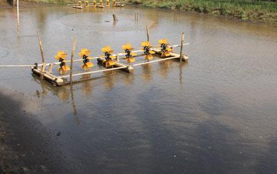 Mengetahui Manajemen Kualitas Air Tambak