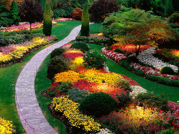 rose flower garden - hd