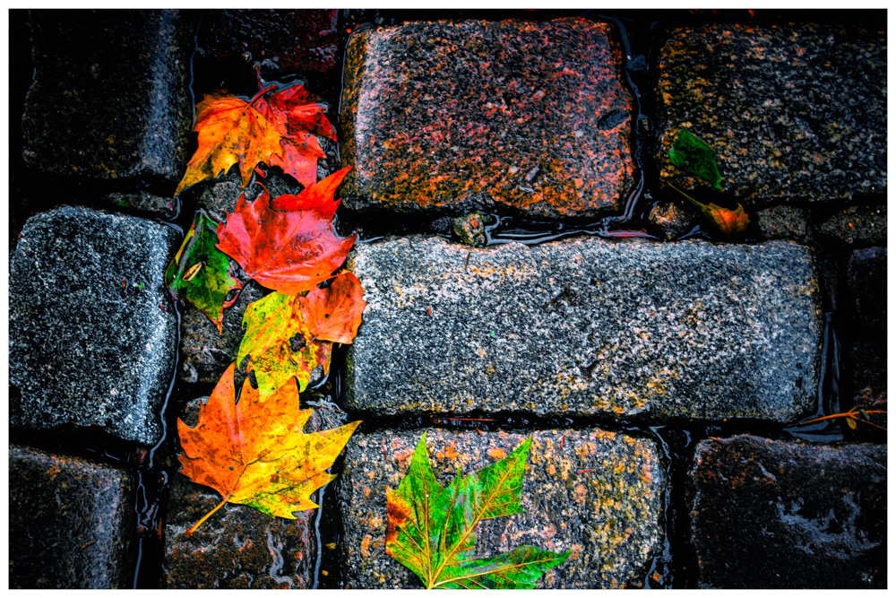 Colorful, Patterns, Still Life, Plants, Fall colors