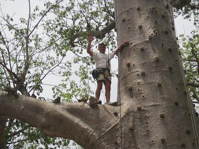 Accro Baobab Adventures, Senegal
