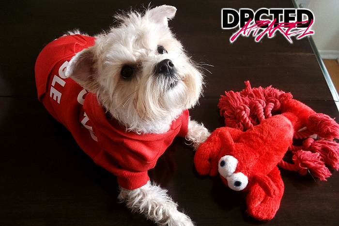 DPCTED Apparel Pet Hoodie