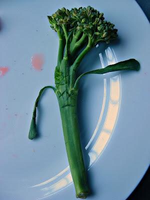 Dead broccoli