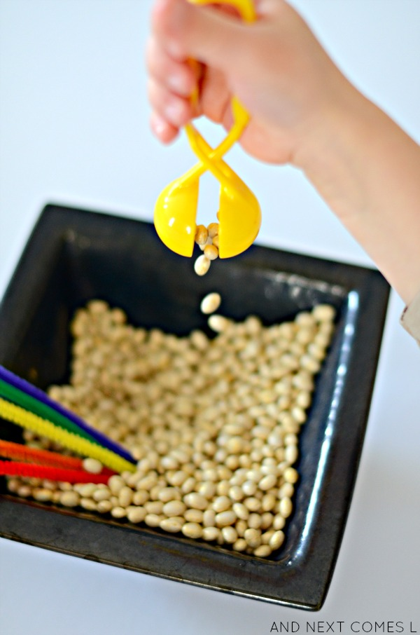 Scooping golden dyed beans from a St. Patrick's Day sensory activity from And Next Comes L