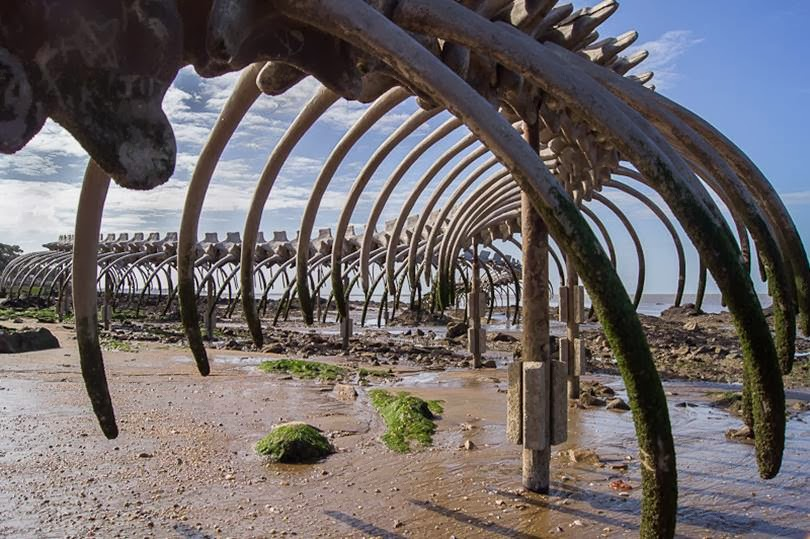 Serpent d'Océan | A Massive Metal Sea Serpent Skeleton on a Beach in France