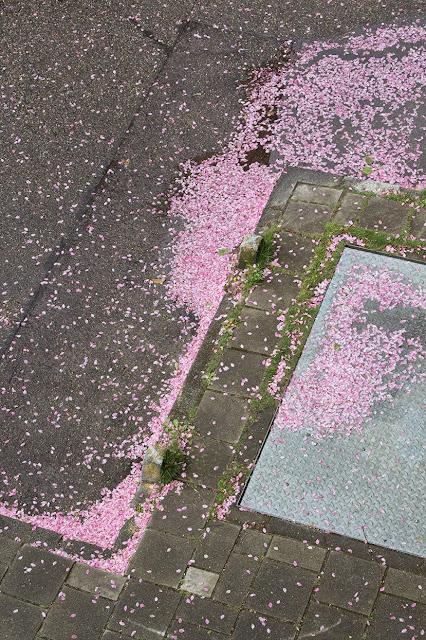 squares of petals