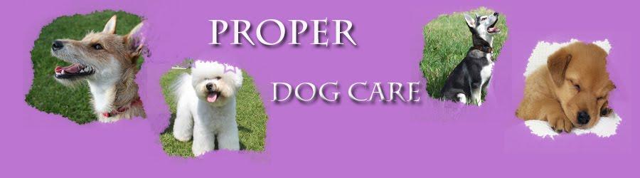 Proper Dog Care