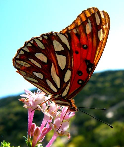 FLOWER SHOP Flowers Butterfly Natural Beauty Desktop Wallpapers