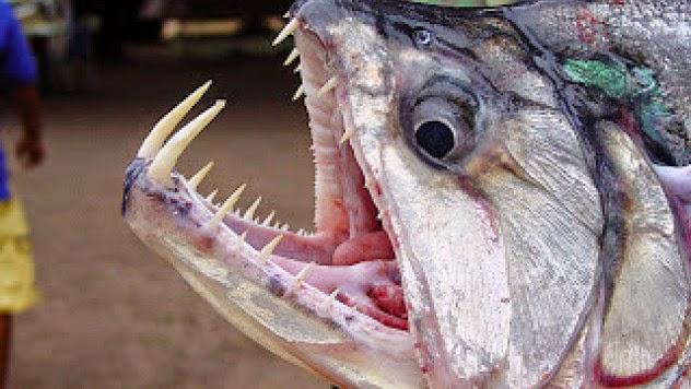 Hillier Lake Fish