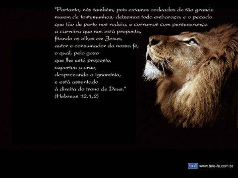 Evangelização Fotos Do Leão Da Tribo De Juda E Tambem Do Espirito Santo