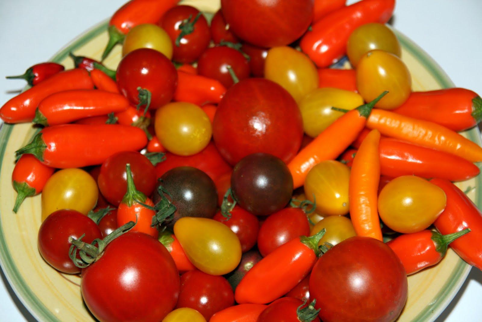 seifens chtig und mehr tomaten und chilisamen abzugeben. Black Bedroom Furniture Sets. Home Design Ideas