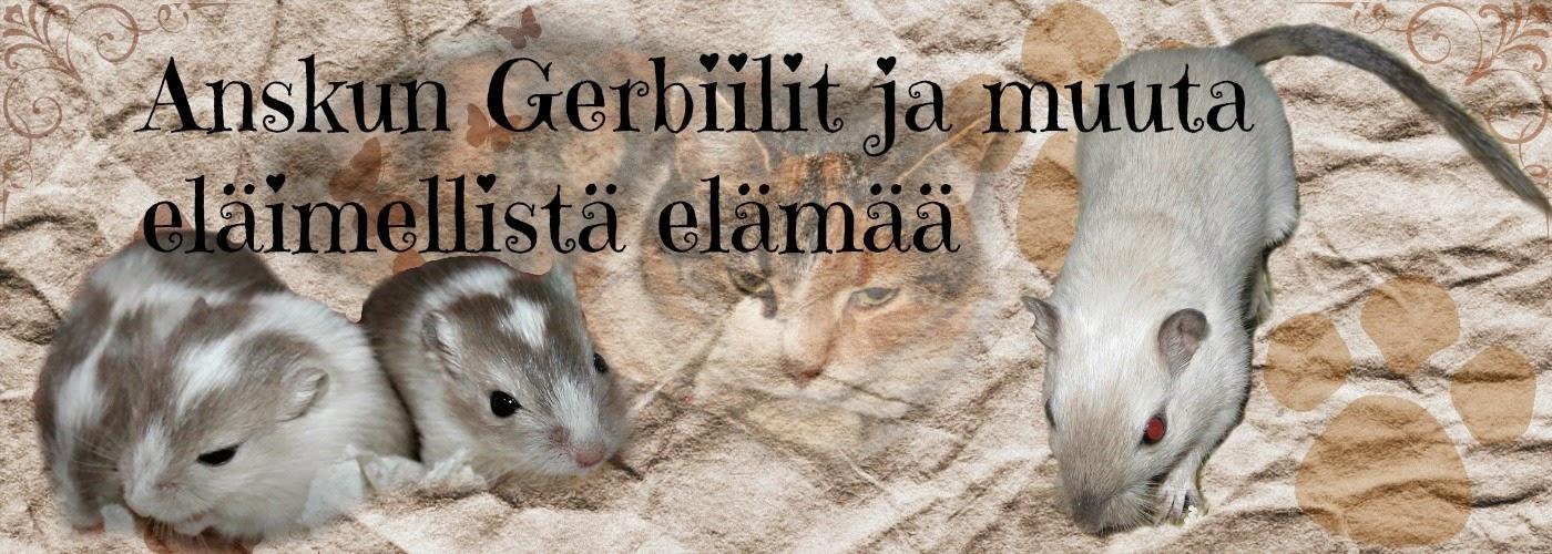 Anskun Gerbiilit ja  muuta eläimellistä elämää