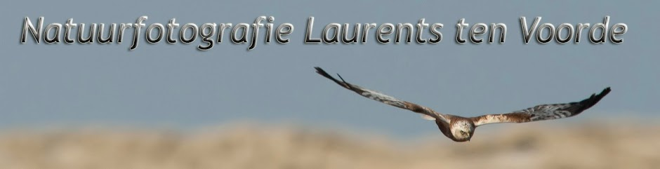 Natuurfotografie Laurents ten Voorde