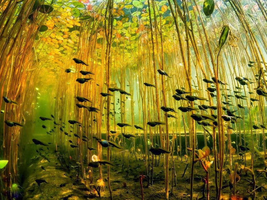 Hình ảnh động vật hoang dã và đáng yêu đến lạ kỳ