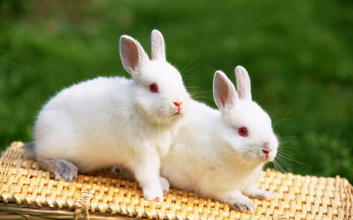 Rabbit hd funny wallpapers funny wallpapers rabbit hd funny wallpapers voltagebd Choice Image