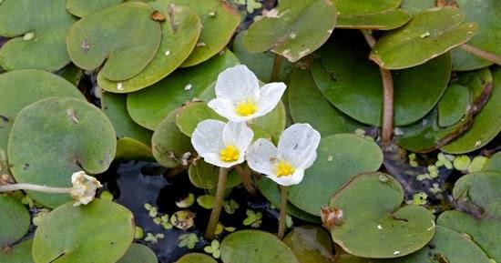 Arte y jardiner a dise o de jardines plantas acuaticas for Jardineria y plantas