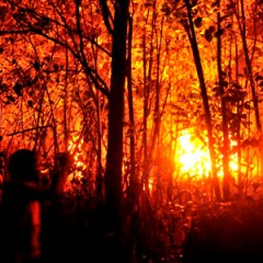 Hutan Sulut Terbakar, 47 Titik Api Terdeteksi
