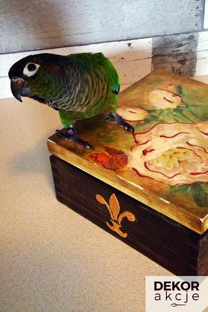 papuga decoupage
