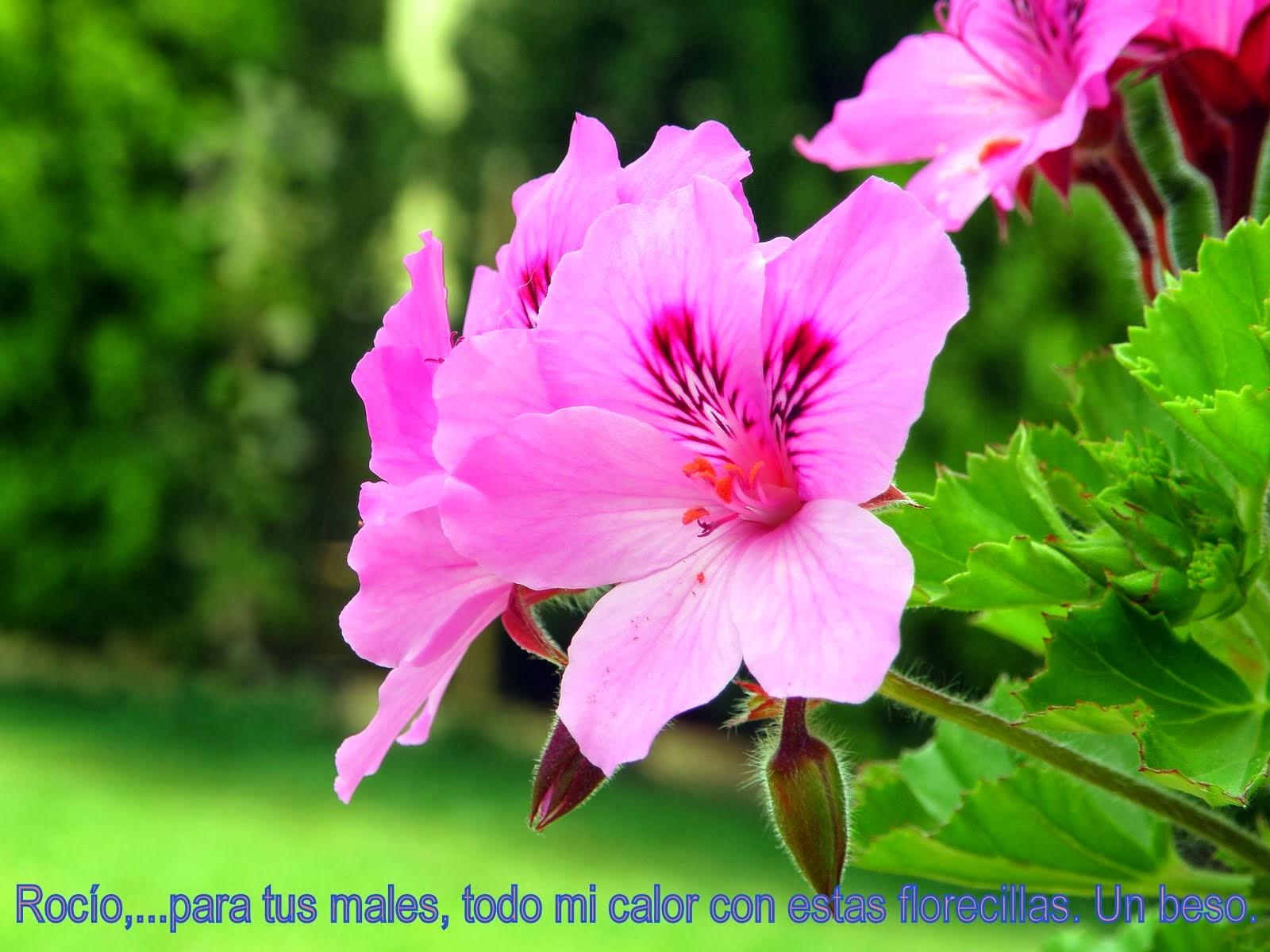 Flor de Abril