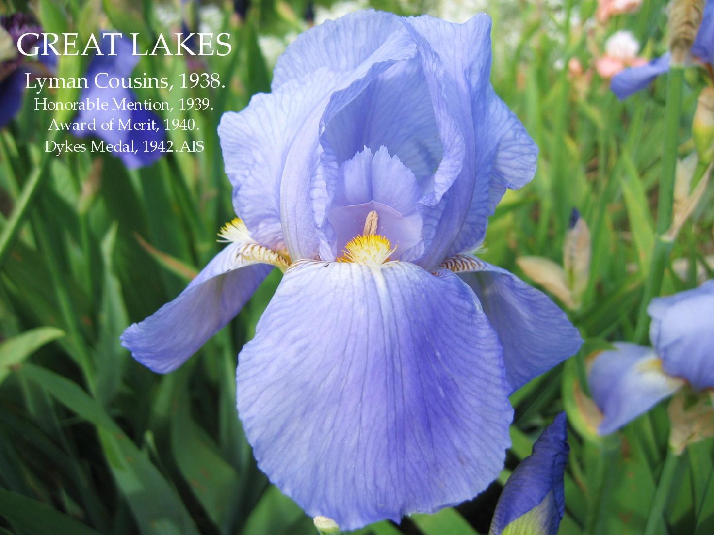 Historic tall bearded iris great lakes heritage irises historic tall bearded iris great lakes izmirmasajfo