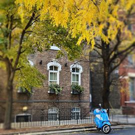 Fall colors with a bright blue motor bike.