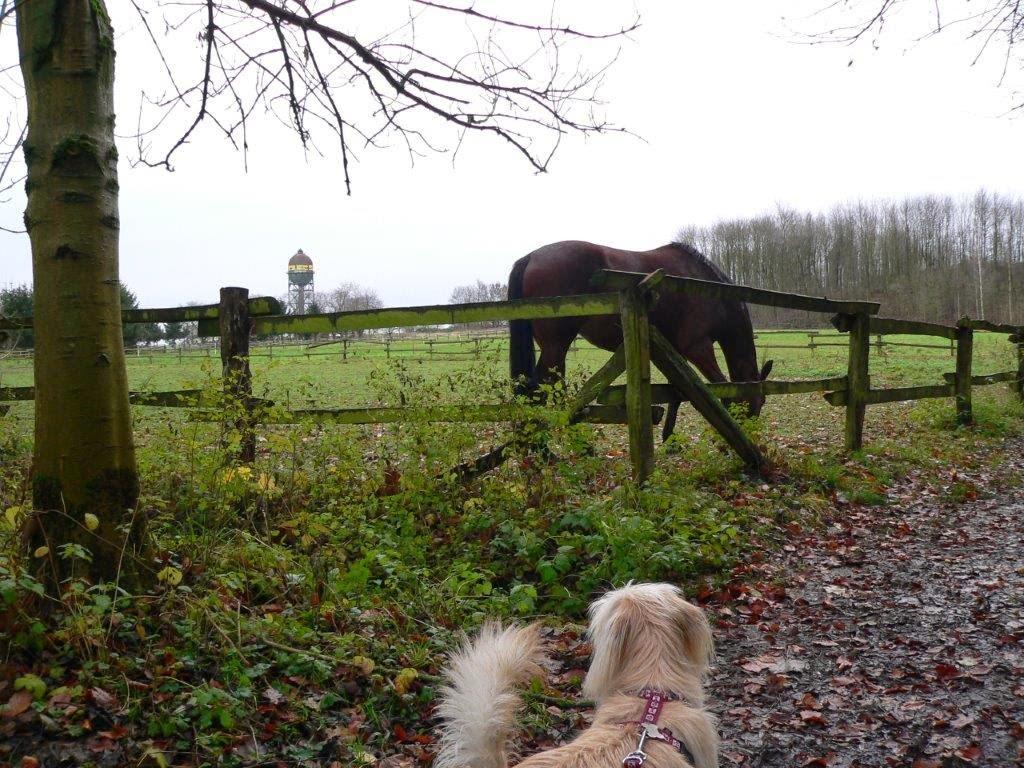 Dortmund Pferdekoppel Hund Pferd Mina