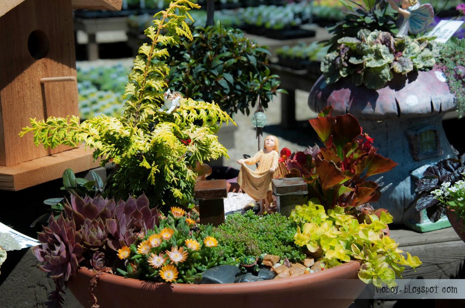 Fairy garden supplies perth wa