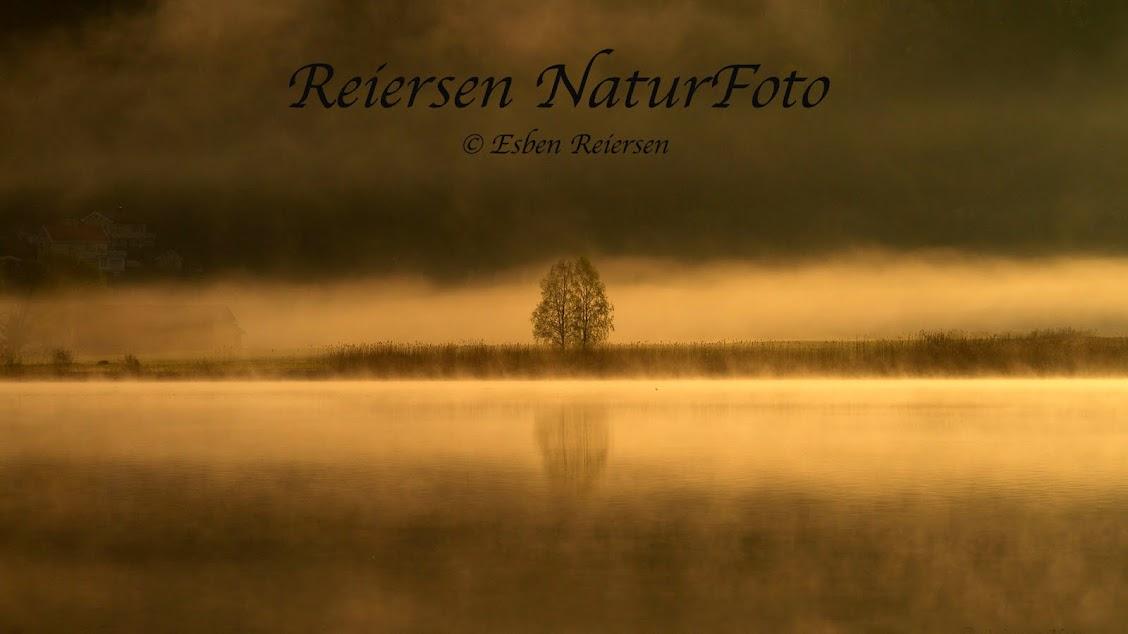 Reiersen NaturFoto
