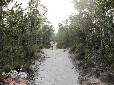 Lintang Trail Heath Forest @ Bako NP - WireBliss