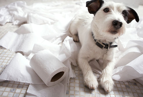 Dogs make the best pets essay