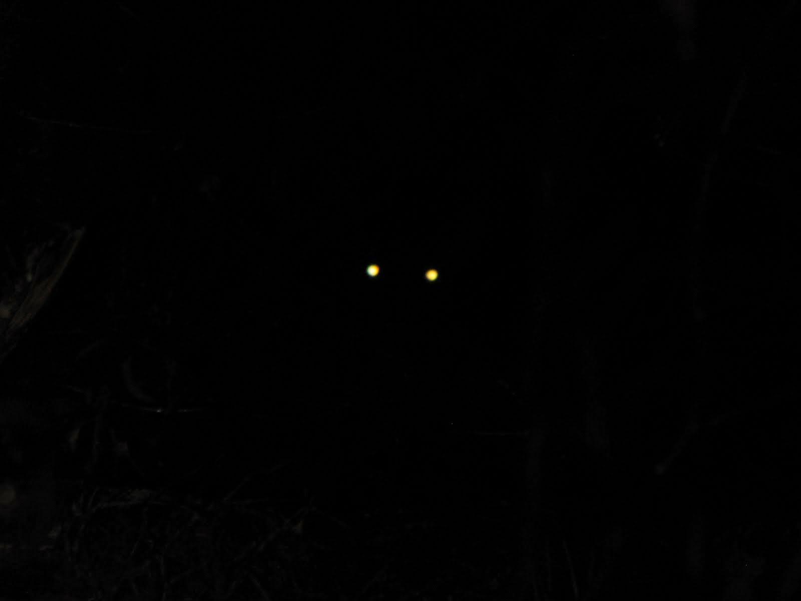 Cats Eye Shine