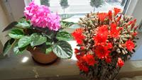 Saksıda yetişen çiçekler