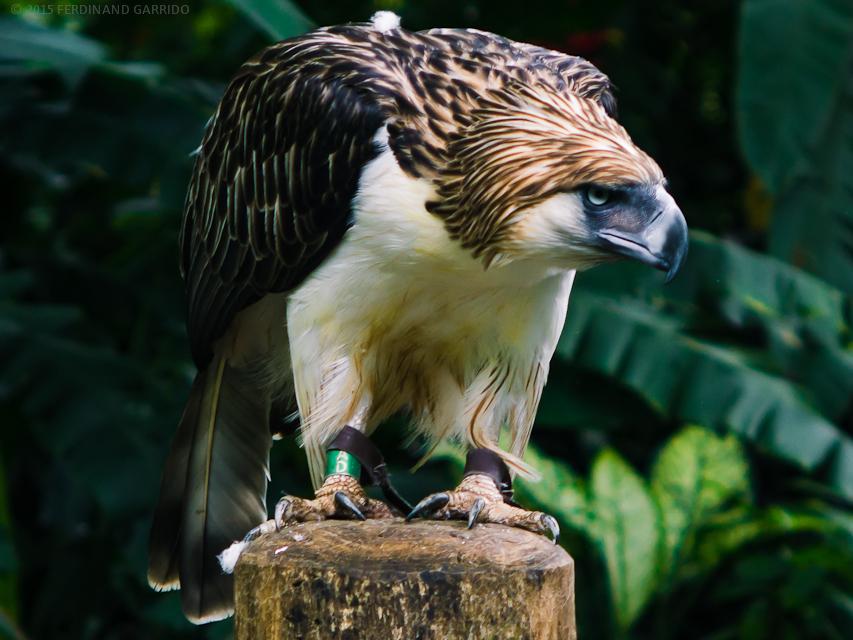 Spread eagle mature the expert