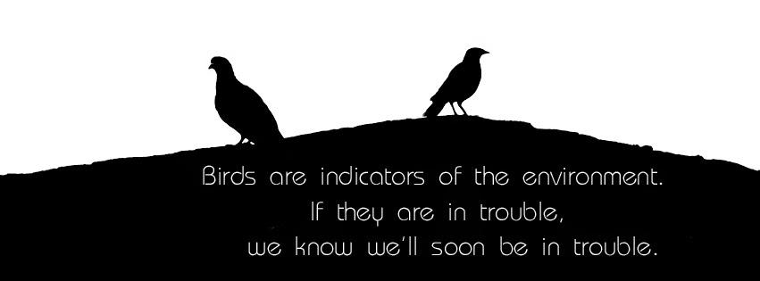 Facebook cover photo of Birds in Dark