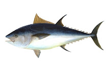 All About Ikan Tuna