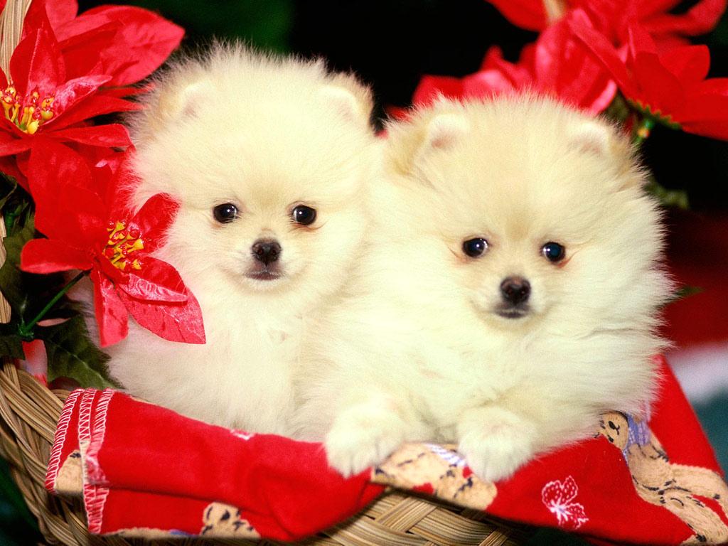 http://4.bp.blogspot.com/-P_5DiAnjX4Y/TvNGC7sAxiI/AAAAAAAABCo/AIeJ3nCkl8o/s1600/Cute-animal-Christmas-wallpaper.jpg