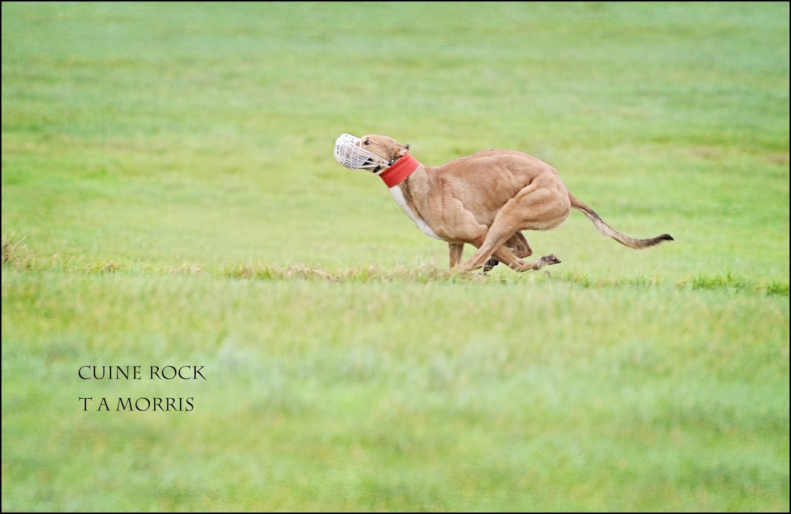 Coursing diary clonmel 2014 for Cuine