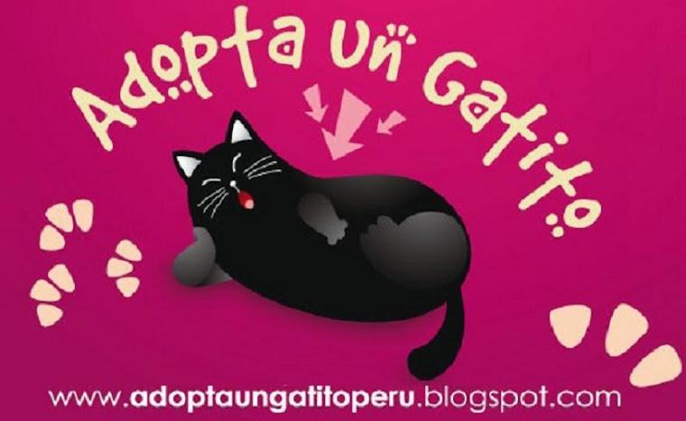 Adopta Un Gatito Perú