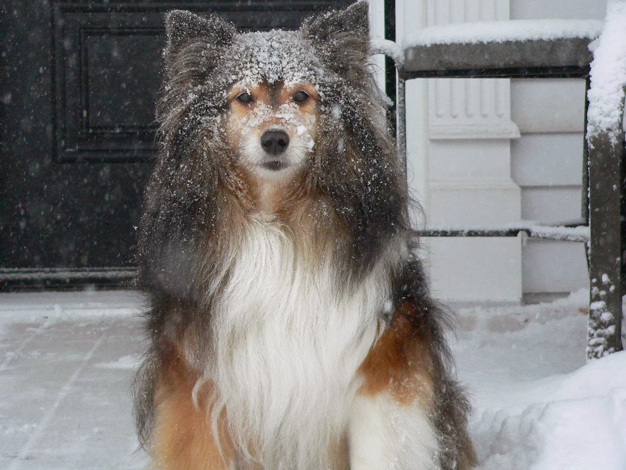 Cute dogs - part 9 (50 pics), dog on the snowy day