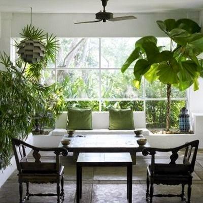 cara merawat tanaman hias dalam ruangan - ragam tanaman