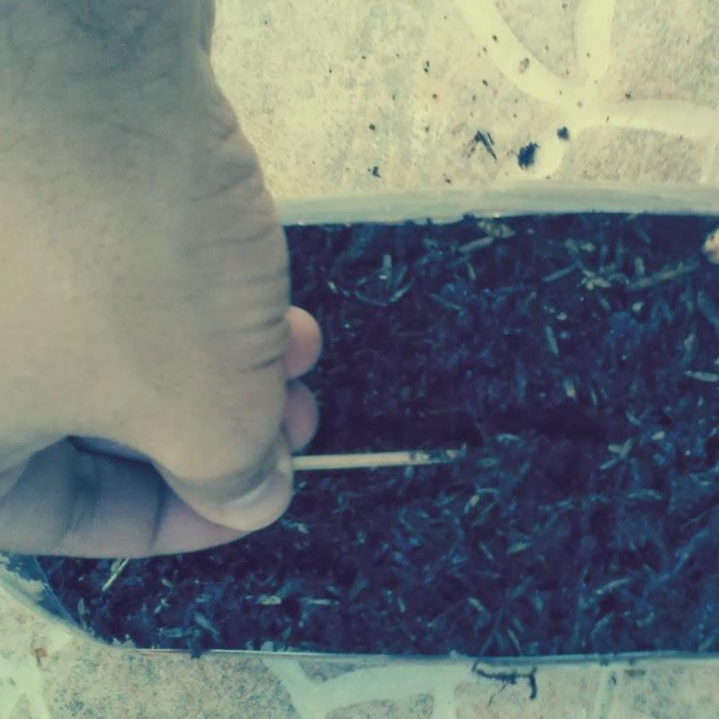 Blogscouter c mo hacer un jard n vertical for Como se hace un jardin vertical