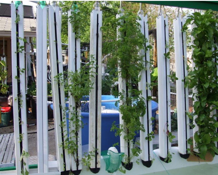 Chico aquaponic idea for vertical gardening for Vertical planting system