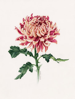 http://eunikenugroho.blogspot.co.uk/2013/12/japanese-chrysanthemum-continuing.html