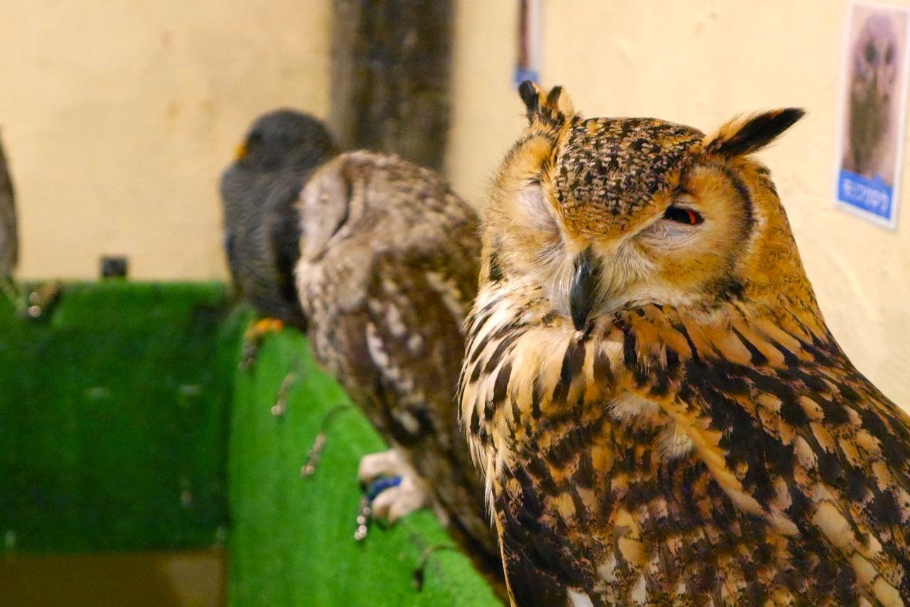Owl and Bird Cafe