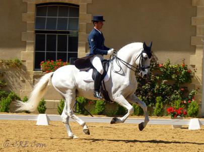 Peralta caballos pre venta yeguada pura raza espa ol y cde spanish horses elevage chevaux - Caballo silla frances ...