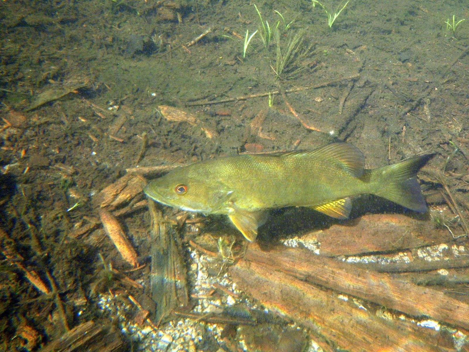 Bullet pond journal for Preparing pond water for fish