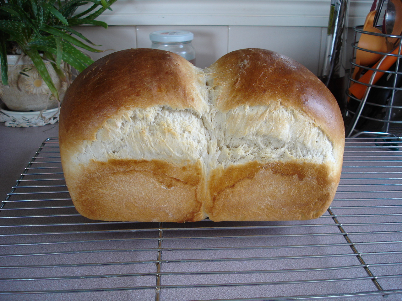 The average price of a gram (slightly over 1 pound) loaf of fresh white bread is somewhere between $ and $ in the United States, as of The average price ranges from $2 to $ in different locations in the United States.