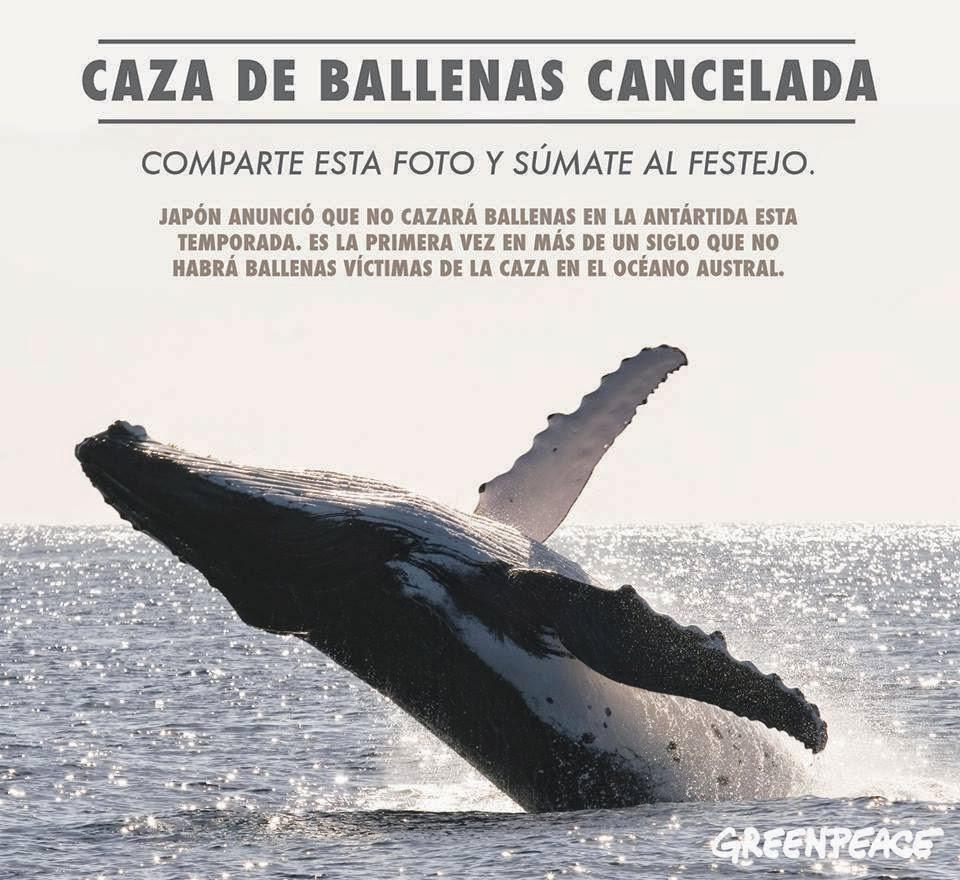 No más caza de ballenas