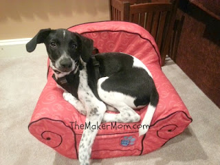 Puppy Dog in Thinking Chair