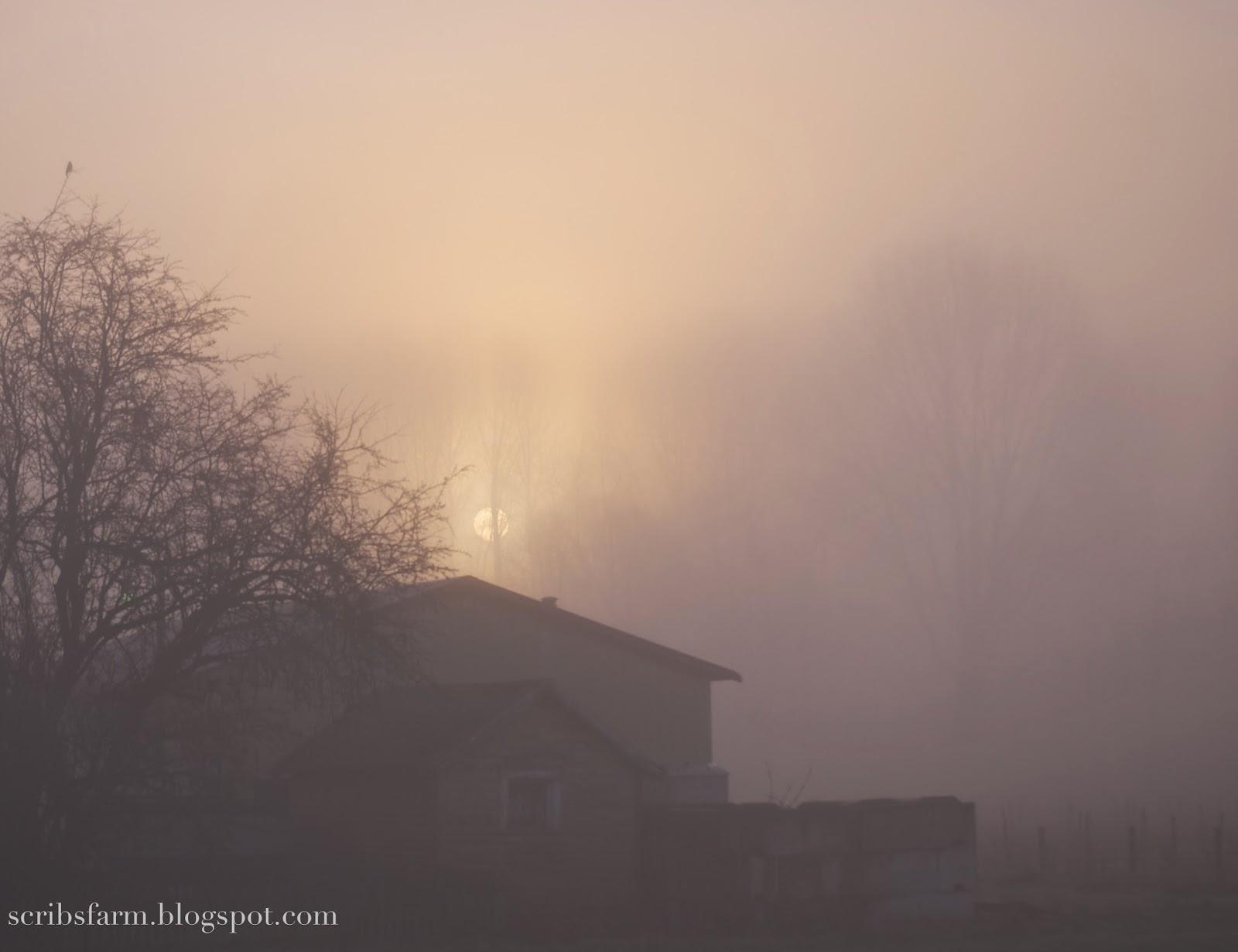 Foggy Morning Scribsfarm