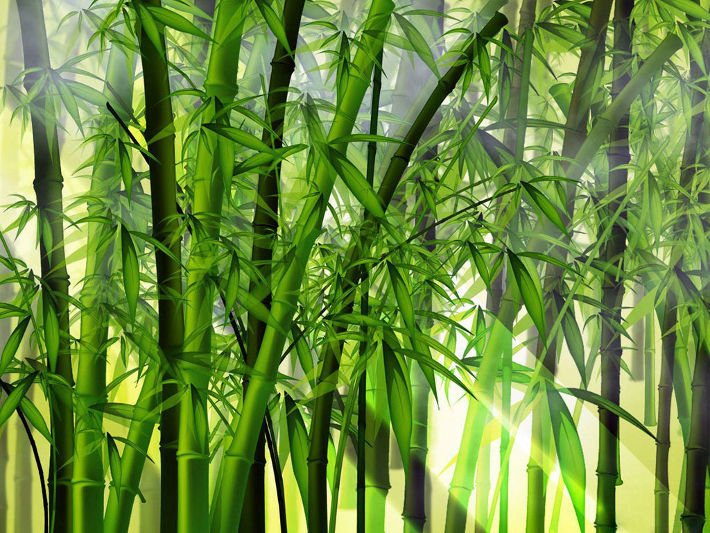 Rw paisagismo escult rica bambu - Tipos de bambu ...